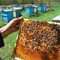 пчельник